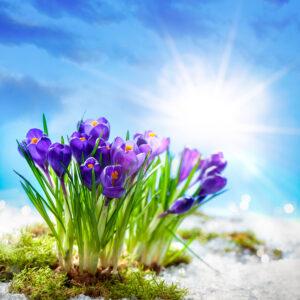 Passa på att boka in JEMT Vatten och Värme redan innan påsk! Vi har lite luckor denna veckan. Påminner om att vi har ständig jour för akuta ärenden!